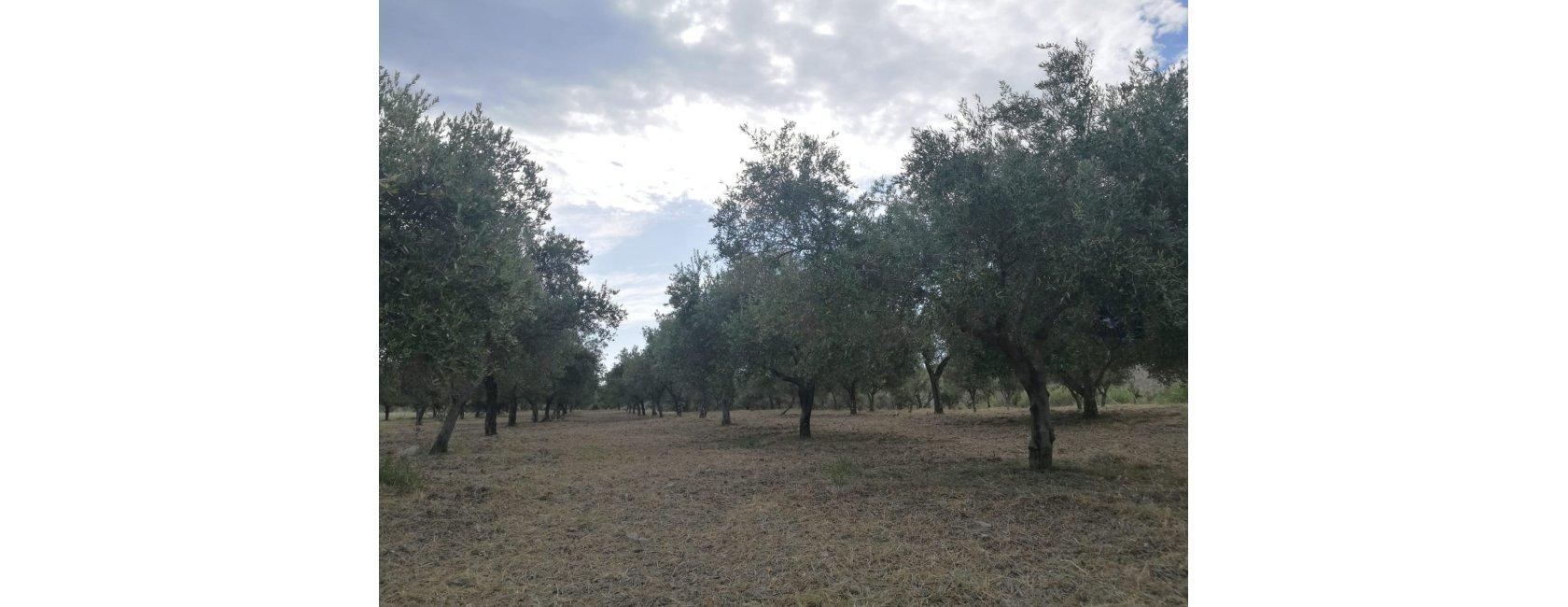 Agraria Gallelli
